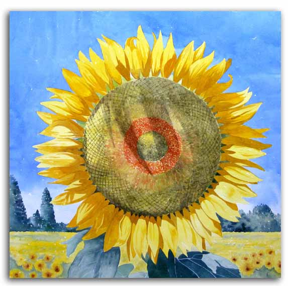 Original watercolour painting of a sunflower, by artist Lesley Olver